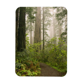 Rhododendron blooming among the Coast Redwoods Rectangular Magnets