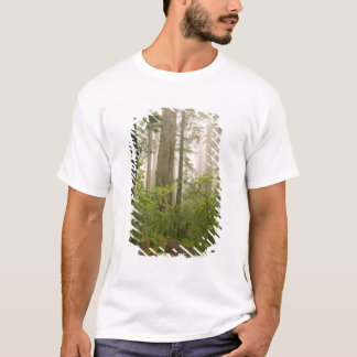 Rhododendron blooming among the Coast Redwoods / T-Shirt