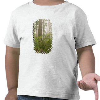 Rhododendron blooming among the Coast Redwoods T-shirts