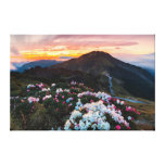 Rhododendron Blooming | Taroko National Park Canvas Print
