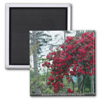 Rhododendron bush, Nymans Gardens, England 2 Inch Square Magnet