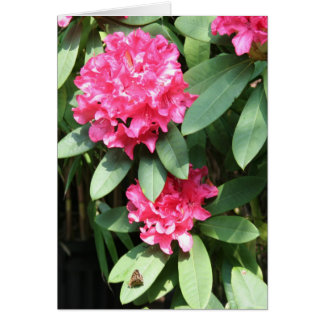 Rhododendron Floral Photography Card