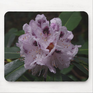 Rhododendron Flower Mousepad