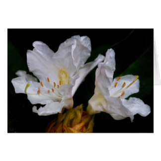 Rhododendron flowers card