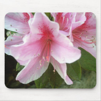 Rhododendron Flowers Mouse Pad