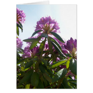 Rhododendron Heights Card