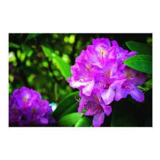 Rhododendron in Bloom Stationery