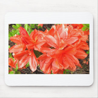 Rhododendron in orange mouse pad