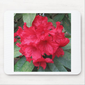 Rhododendron in red mouse pad