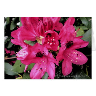 Rhododendron notecards card