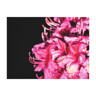 Rhododendron on black canvas prints