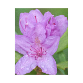 Rhododendron on canvas gallery wrapped canvas