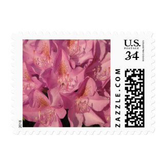 Rhododendron Pink Close Postage Stamps