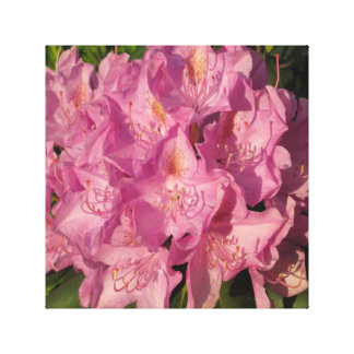 Rhododendron Pink Cluster Canvas Print