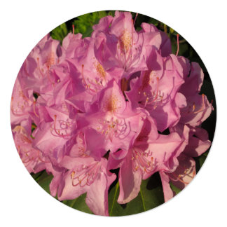 Rhododendron Pink Cluster Card