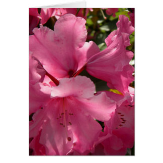 Rhododendron Pink Glow 2 Card