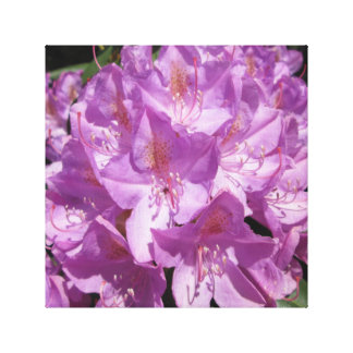 Rhododendron Purple Close Stretched Canvas Prints
