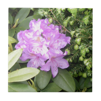 Rhododendron - Purple Flowers in Spring Ceramic Tile