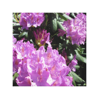 Rhododendron Purple Green Stretched Canvas Prints