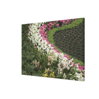 Rhododendron (Rhododendron catawbiense) Heath Stretched Canvas Prints