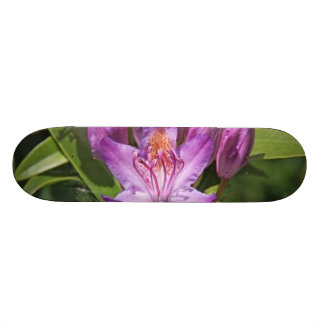 rhododendron skate board decks