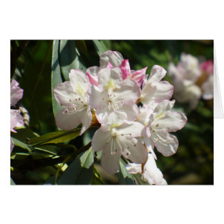 Rhododendrons 172 stationery note card