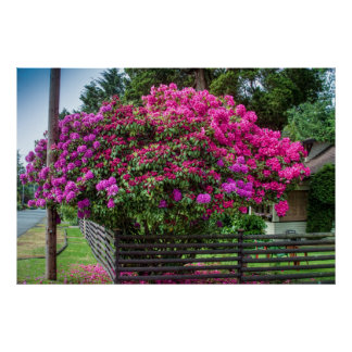Rhododendrons Kissing Telephone Pole Poster