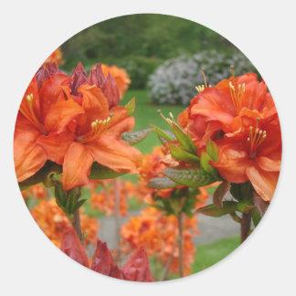 Rhododendrums 25 tazas de los regalos de las pegatina redonda