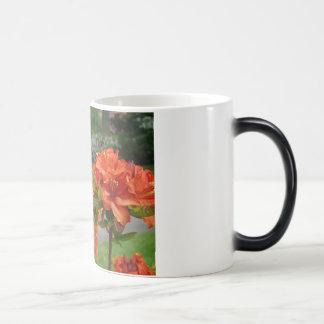 Rhododendrums 25 tazas de los regalos de las tarje