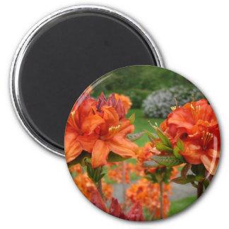 Rhododendrums 25 tazas de los regalos de las tarje imán redondo 5 cm