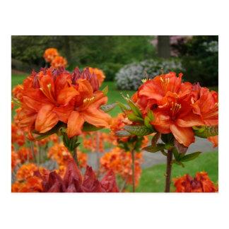 Rhododendrums 25 tazas de los regalos de las postales
