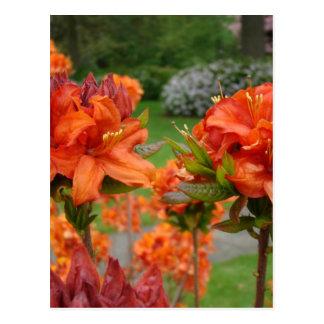 Rhododendrums 25 tazas de los regalos de las postal