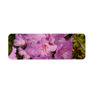 rhododrendron de la lila etiqueta de remite