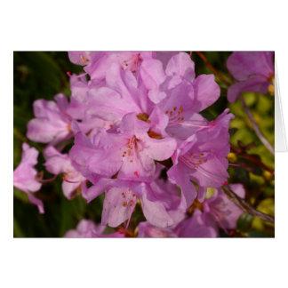 rhododrendron rosado tarjeta pequeña
