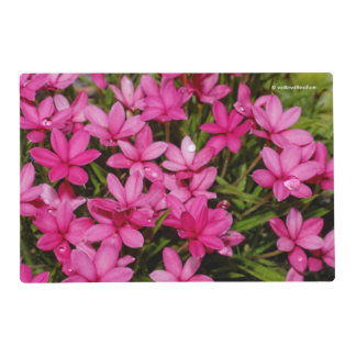 Rhodohypoxis / Red Star / Rosy Posy Placemat