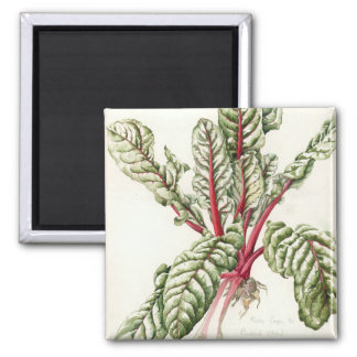 Rhubarb Chard 1992 2 Inch Square Magnet
