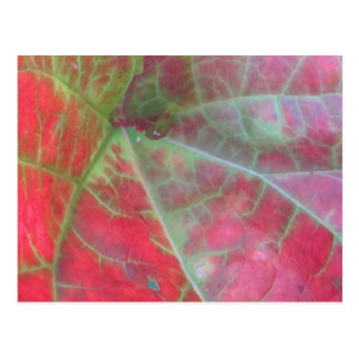 Rhubarb Leaf Postcard