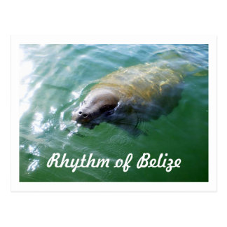 Rhythm of Belize Manatee in the River Blank Card