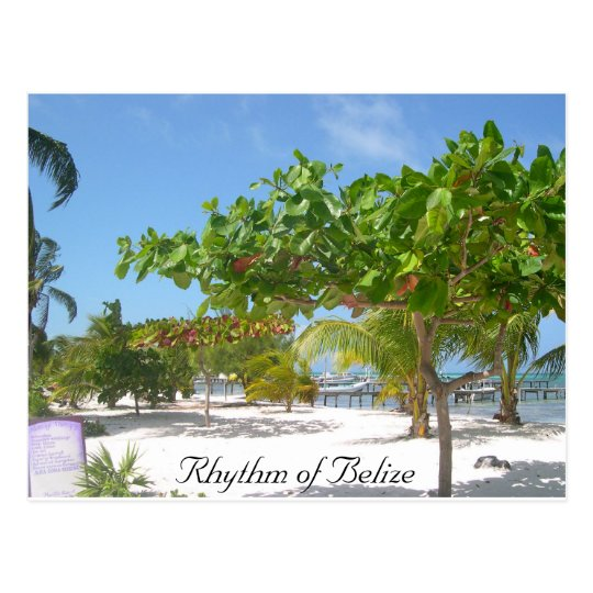 Rhythm of Belize Postcard
