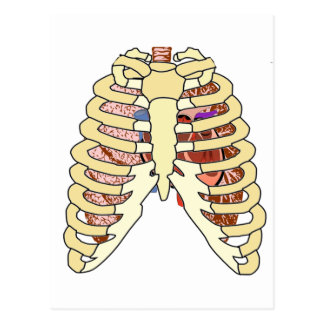 Rib Cage Lungs & Heart Postcard