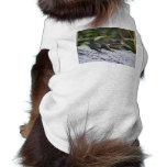 ribbit camisa de mascota