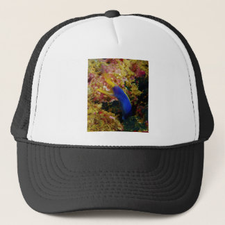 Ribbon Eel Rhinomuraena Quaesita Bernis Eel Trucker Hat