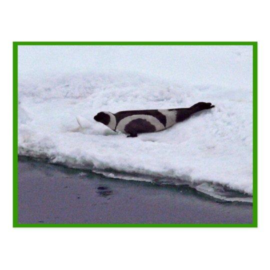 Ribbon Seal Postcard