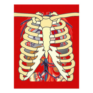 Ribs Veins Enlarged Heart Letterhead