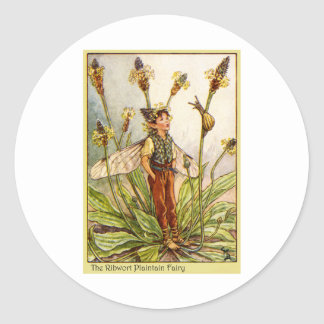 Ribwort Plaintain  Fairy Classic Round Sticker