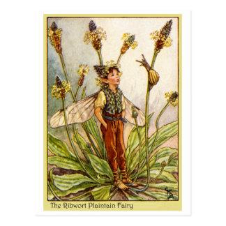 Ribwort Plaintain  Fairy Postcard
