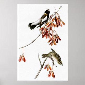 Rice Bird John James Audubon Birds of America Poster