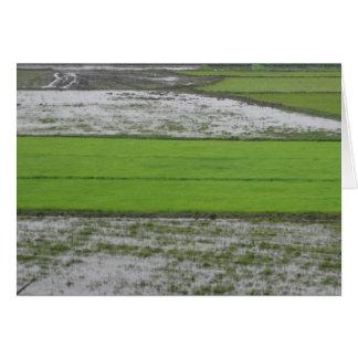 Rice - Chennai, India Card