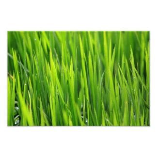 Rice Dominican Republic Photo Print