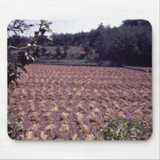 Rice drying in field ROK 77 Mouse Pad
